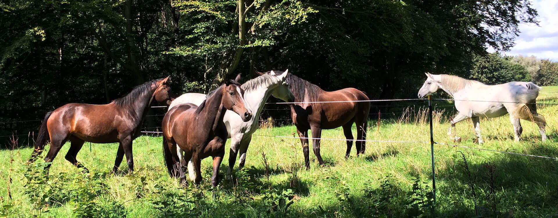 GC-Pferde-Zucht_Head
